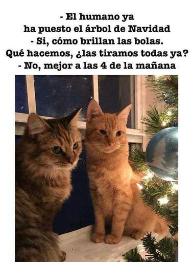 Navidad-gatos-meme-catmemes