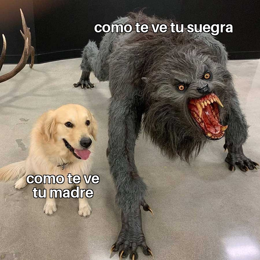 meme perros dogmeme