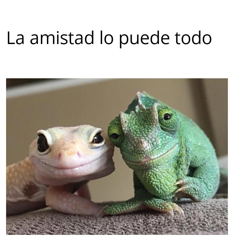 meme amistad lagartijas