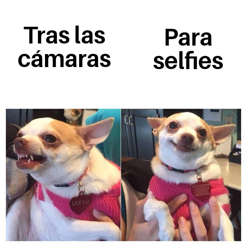 meme perros dog meme selfies
