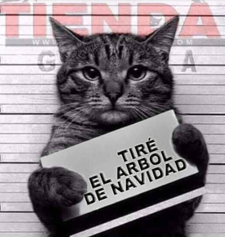 meme gatos catmemes gatosyarbolesdenavidad