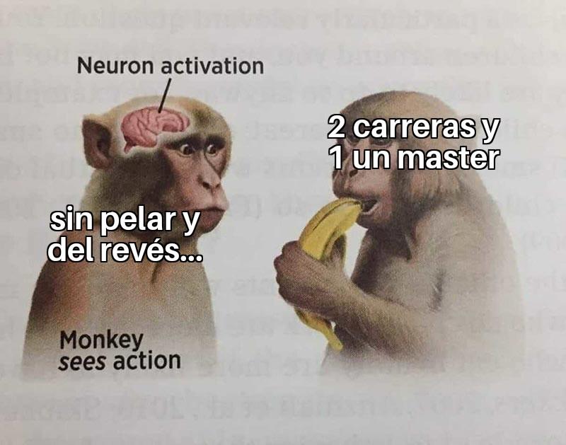 meme monos carreras y master
