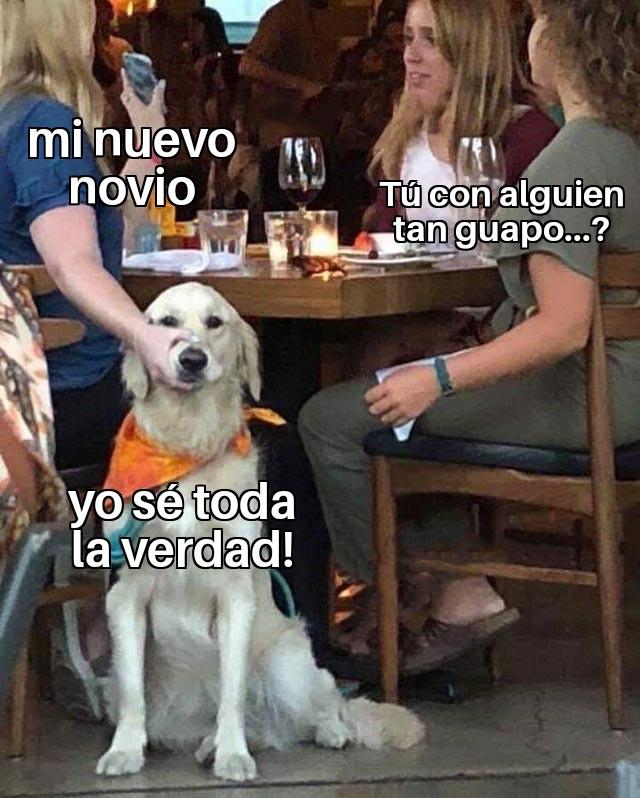 meme perro novio