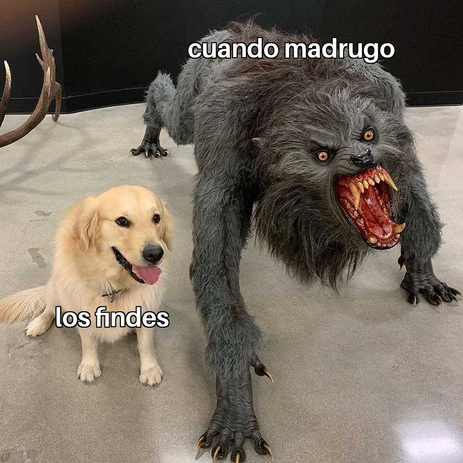 meme perros dog memes madrugar
