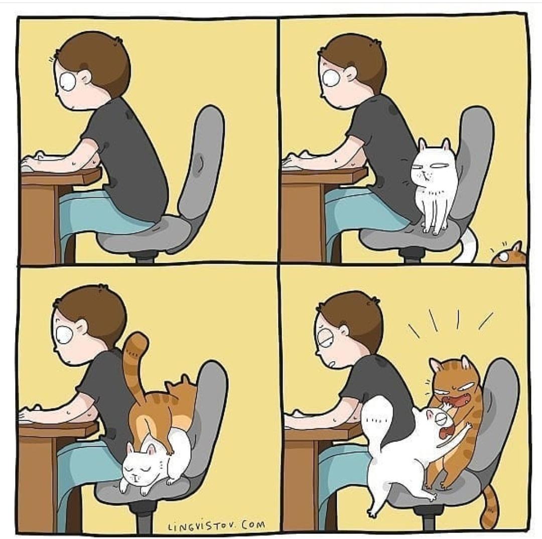 gatos y teletrabajo